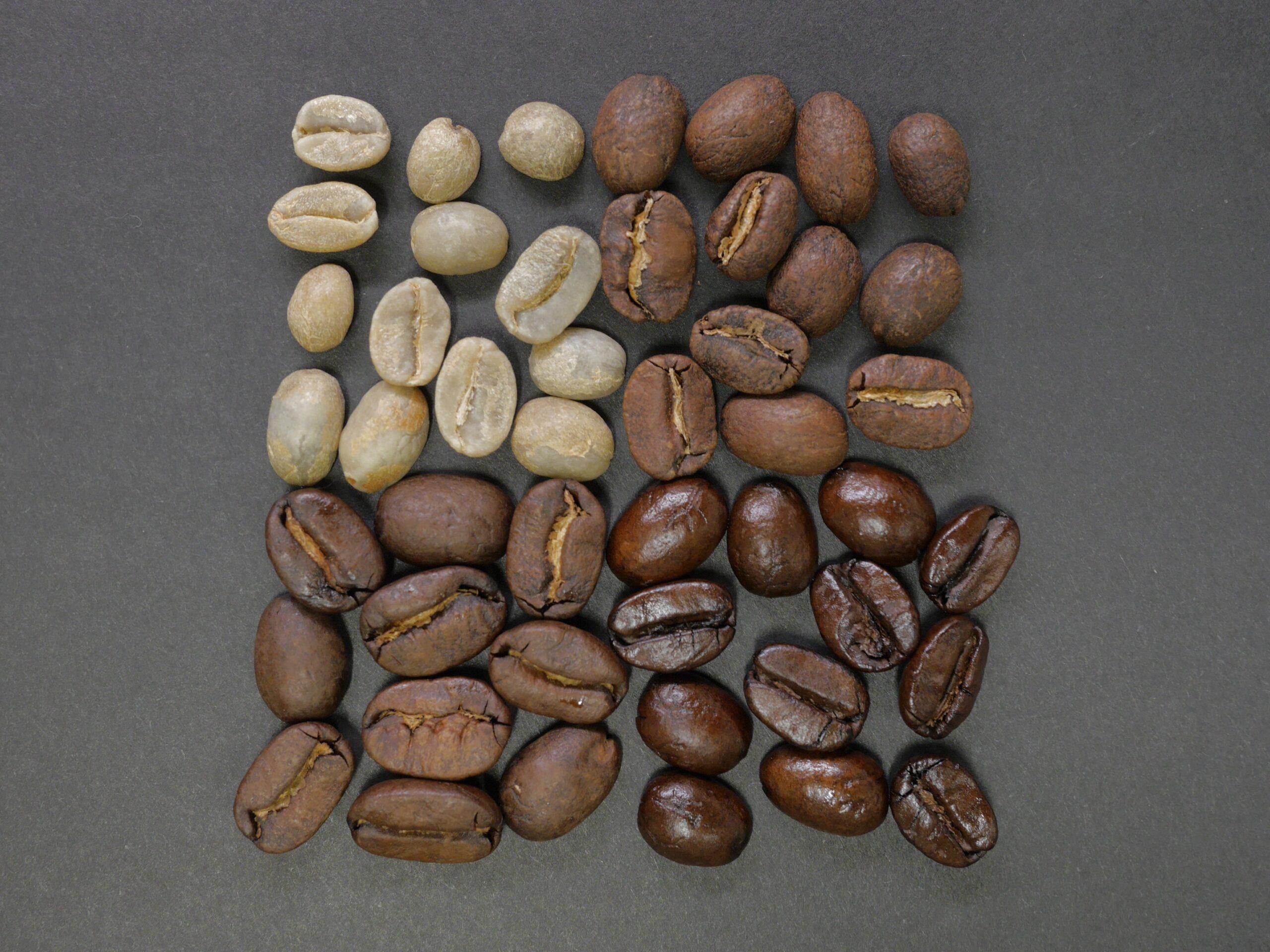 「食力」☕咖啡生豆大解密!到底是什麼成分讓咖啡這麼好喝?