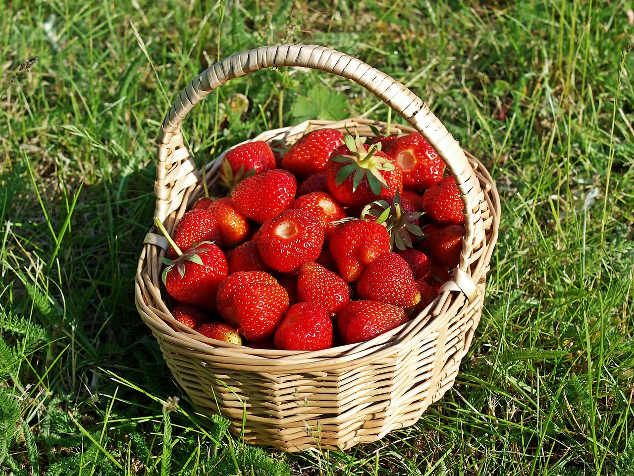 strawberries, bio, garden