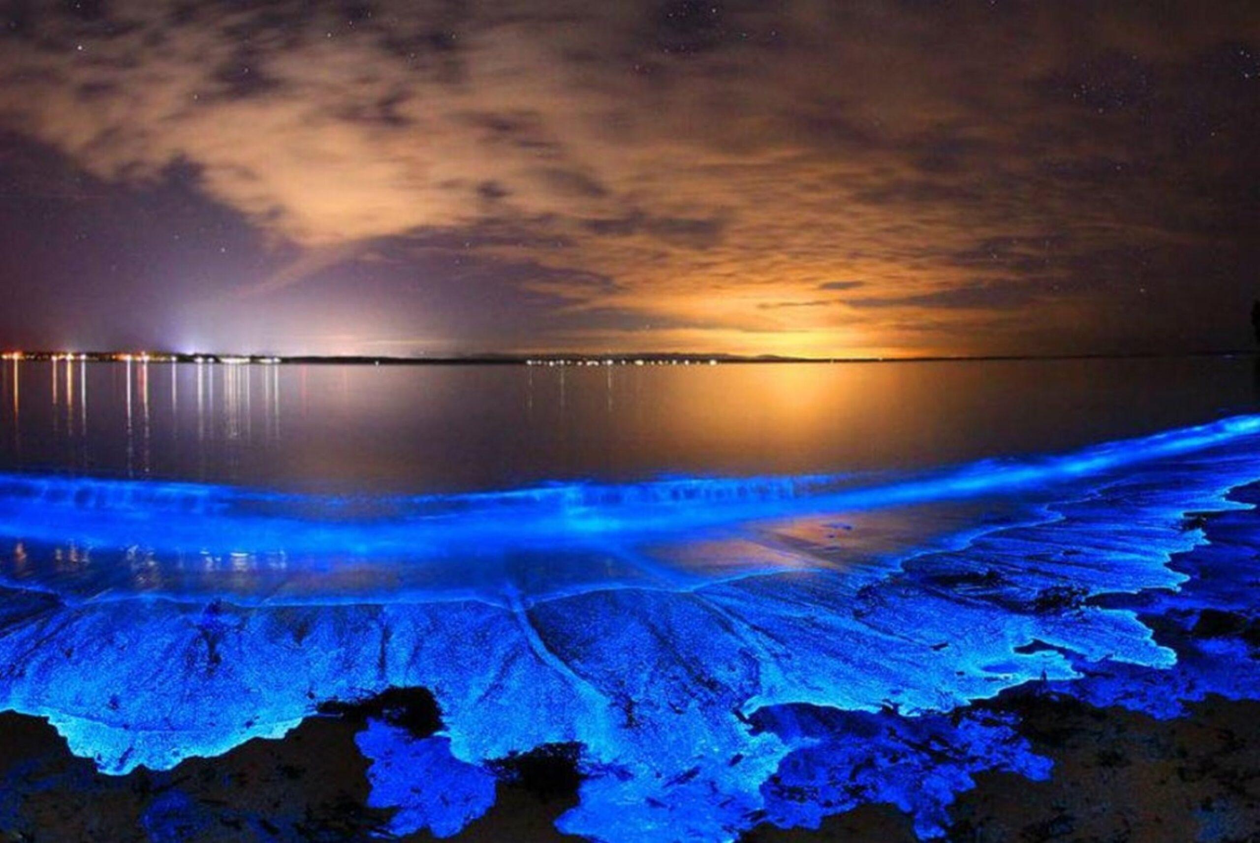 """神奇的藍色""""熒光海""""又回來啦!附加州地區海灘觀賞指南"""