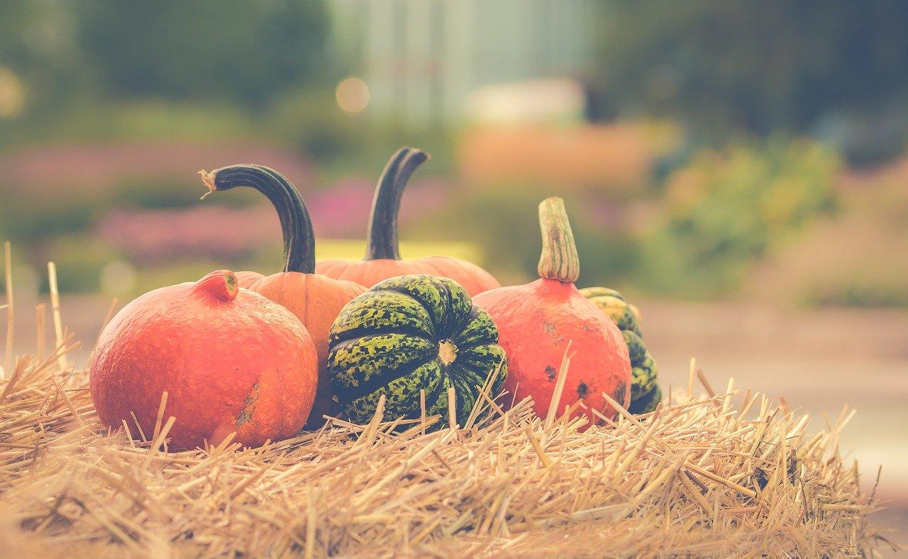 pumpkin, autumn, orange-2989569.jpg