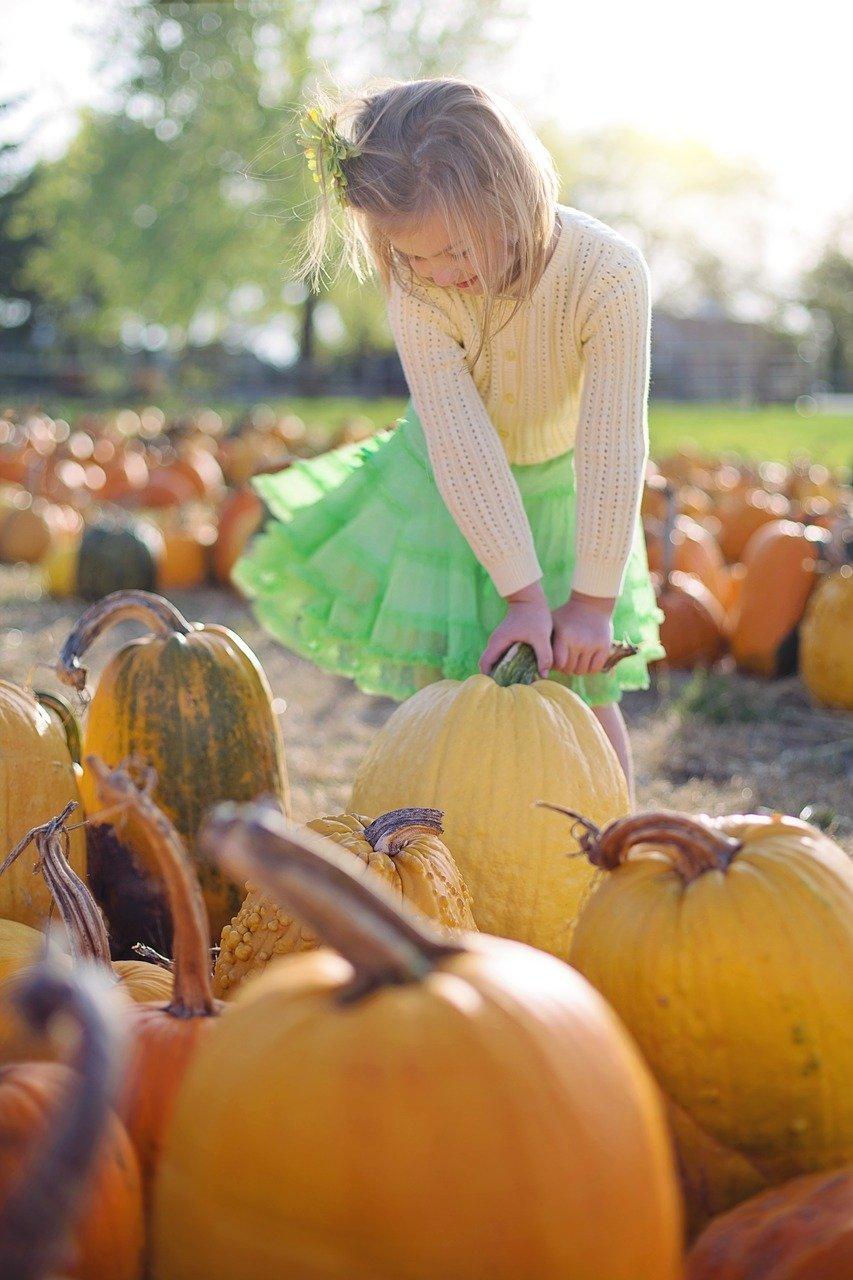 Pumpkin Patch 的季节到了!盘点洛杉矶周边南瓜园全攻略!
